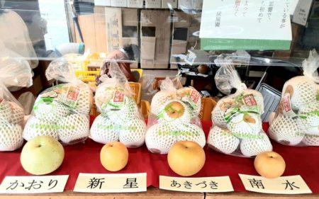 新高梨の販売が始まりました
